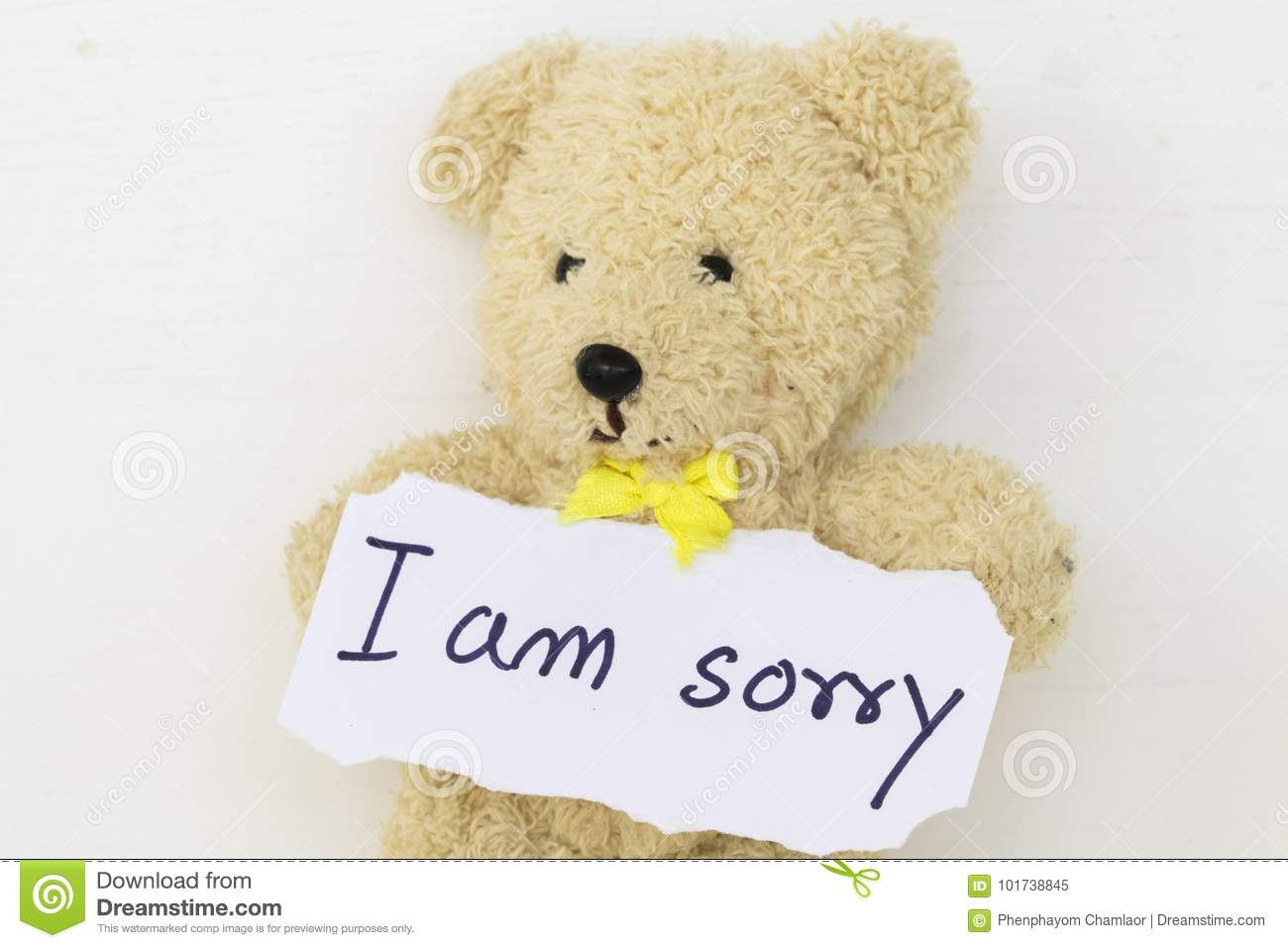 i am sorry message card and teddy bear stock image image of