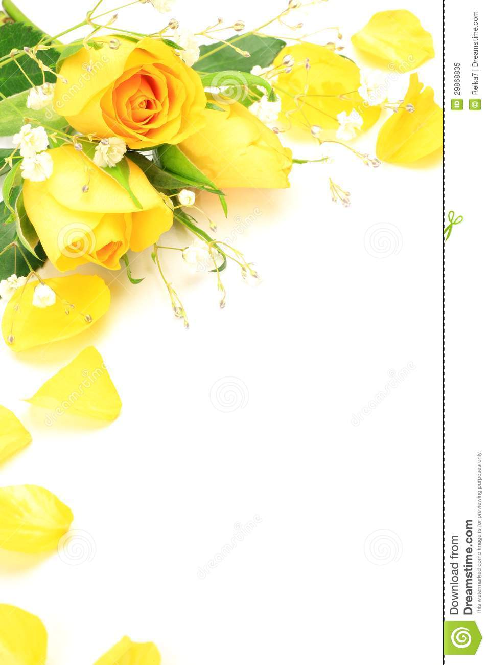 Yellow Rose And Haze Grass Stock Image Image Of White