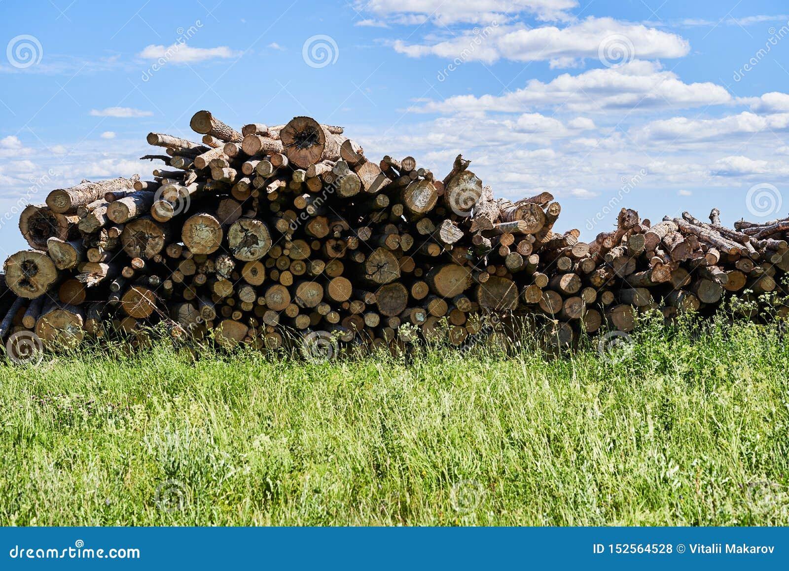 I tronchi di albero segati si trovano in un grande mucchio Rafforzi la raccolta con legname