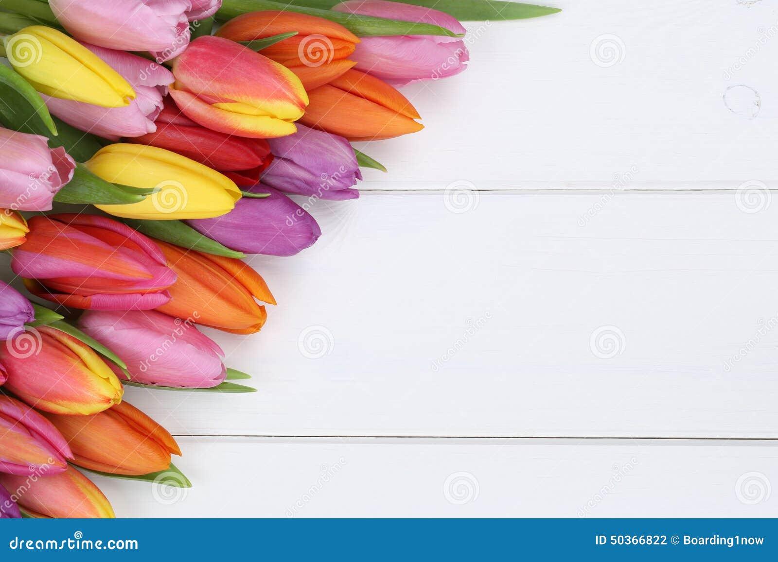 I tulipani fiorisce in primavera o la festa della mamma sul bordo di legno
