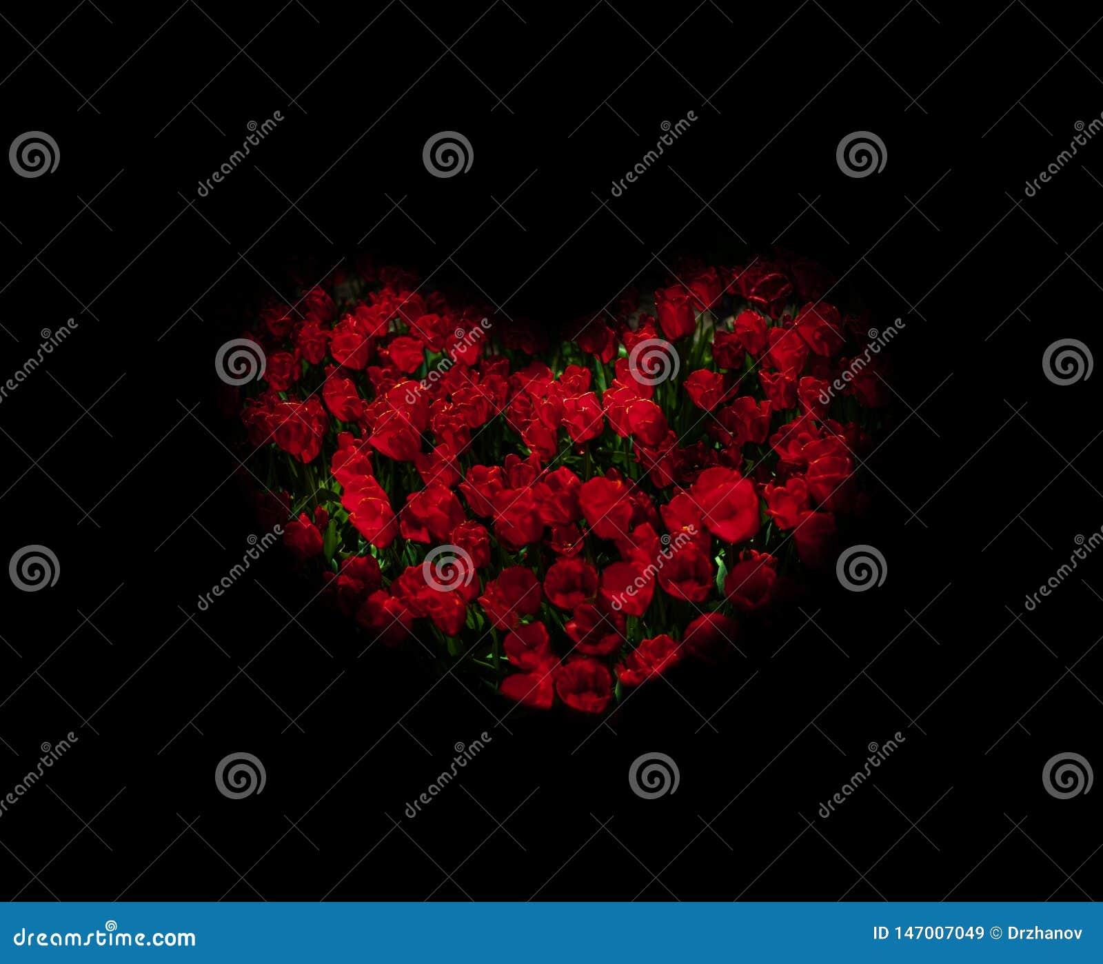 I tulipani rossi sottoesposti hanno stilizzato la forma del cuore
