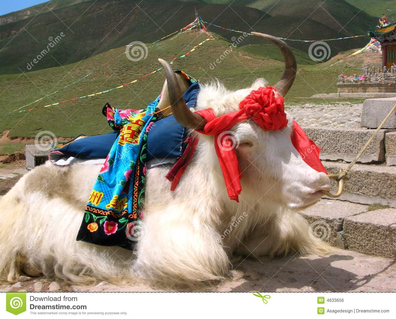 Iaques tibetanos