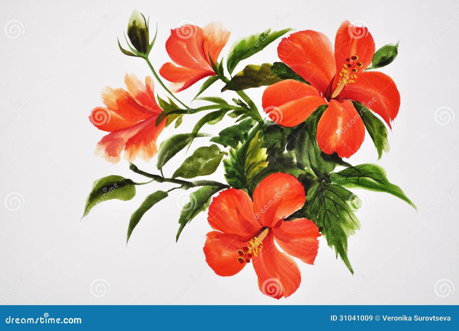 Ibisco rosso caldo immagini stock libere da diritti for Ibisco rosso