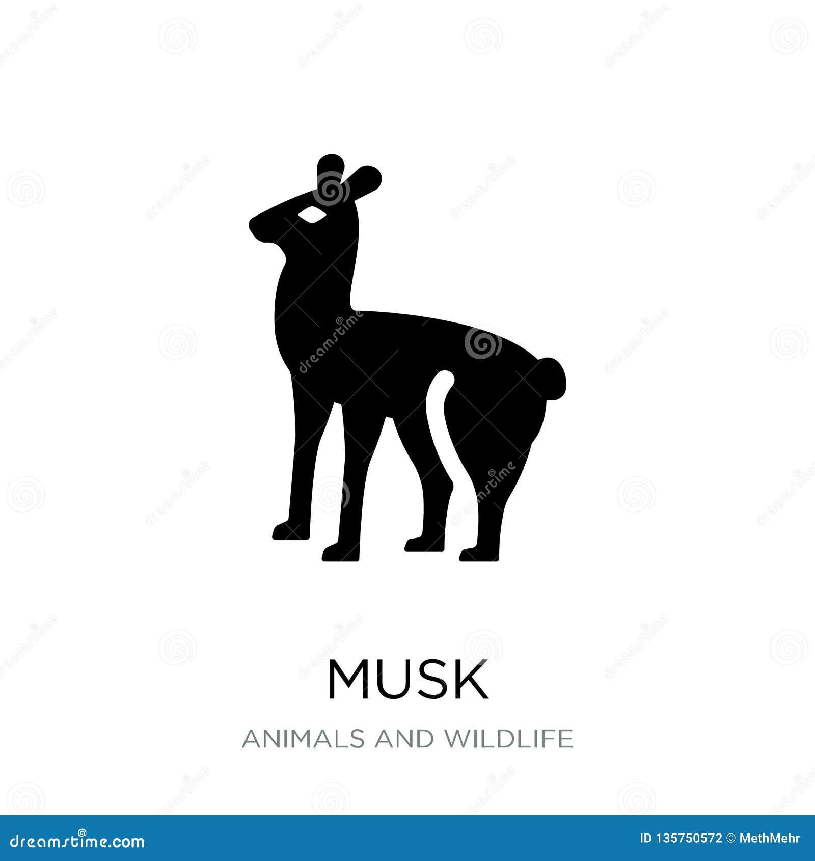 Icône de musc dans le style à la mode de conception icône de musc d isolement sur le fond blanc symbole plat simple et moderne d