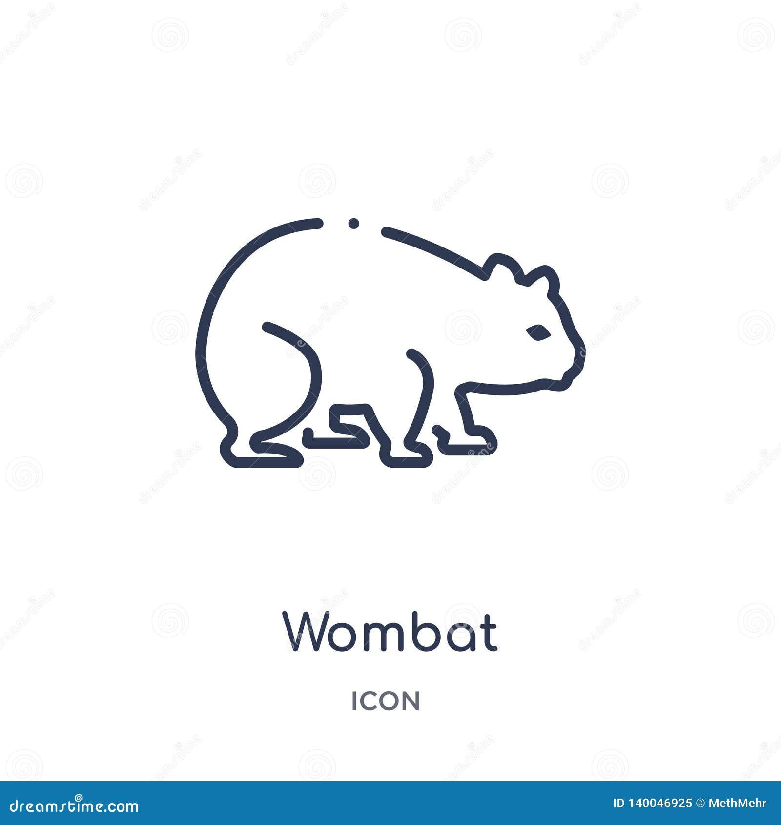 Icône linéaire de wombat des animaux et de la collection d ensemble de faune Ligne mince vecteur de wombat d isolement sur le fon
