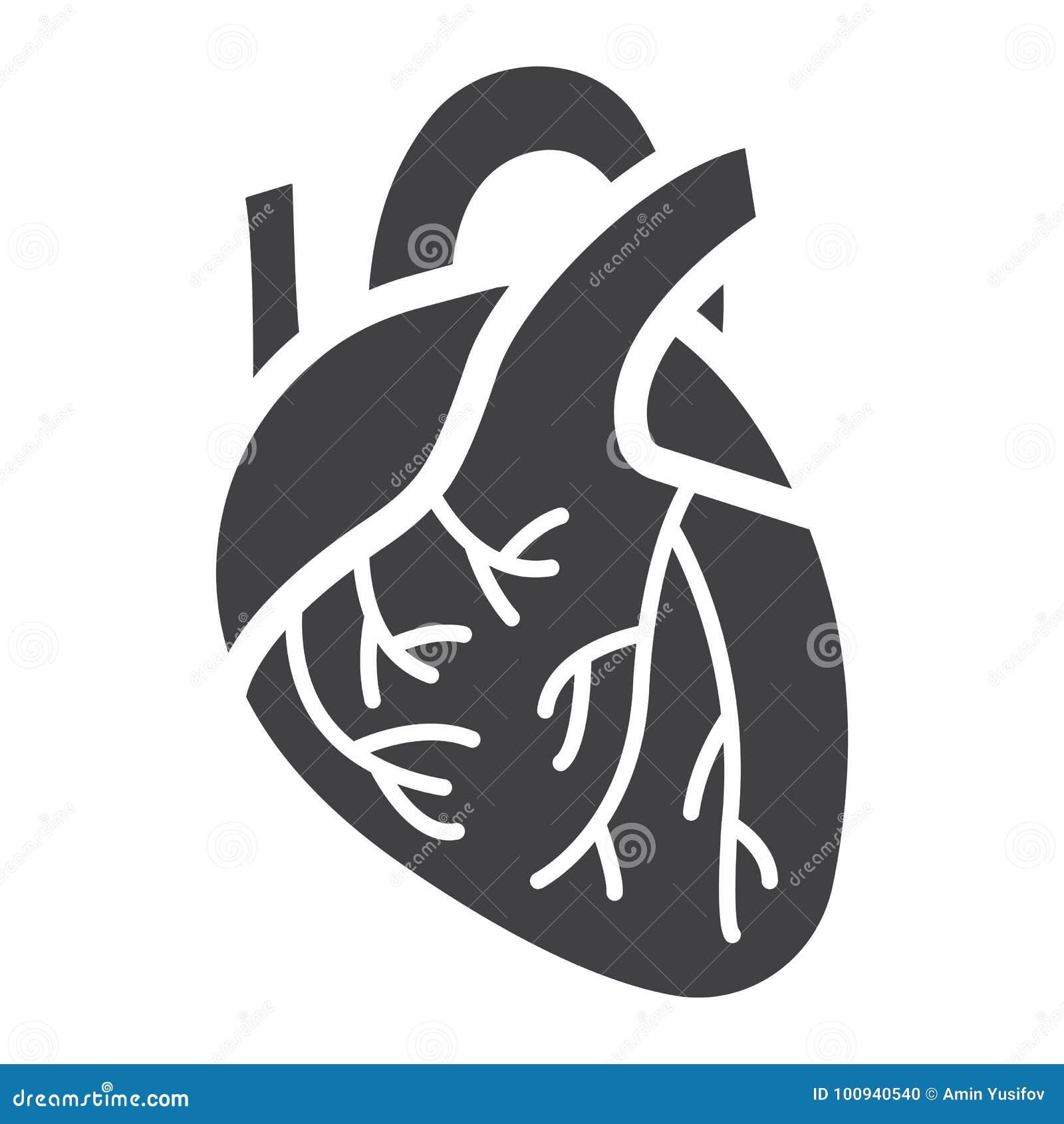 Icône, médecine et soins de santé humains de glyph de coeur