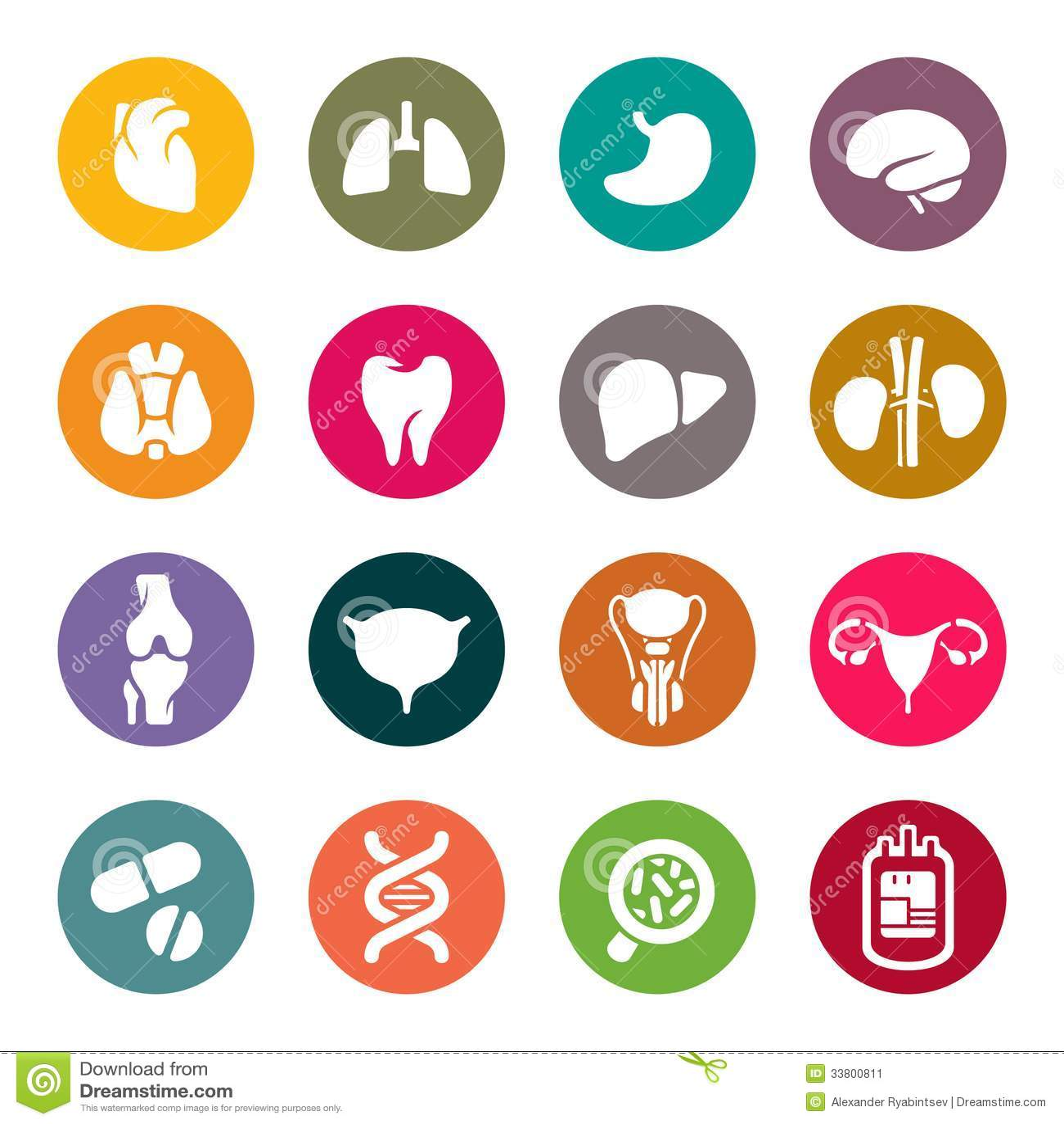 Icônes médicales. Organes humains