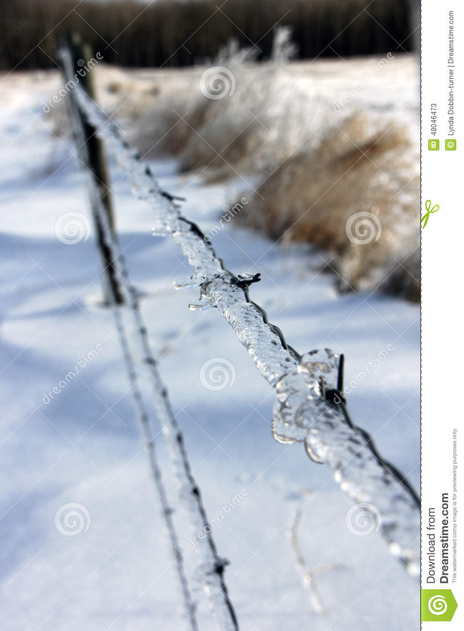 Ice On Barbed Wire After The Storm Stock Image - Image of icestorm ...