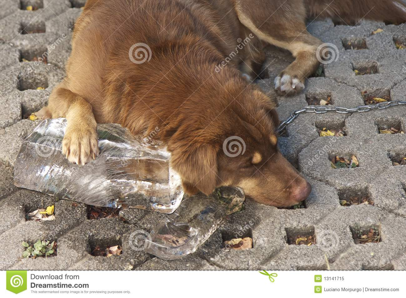 how to make ice blocks for dogs