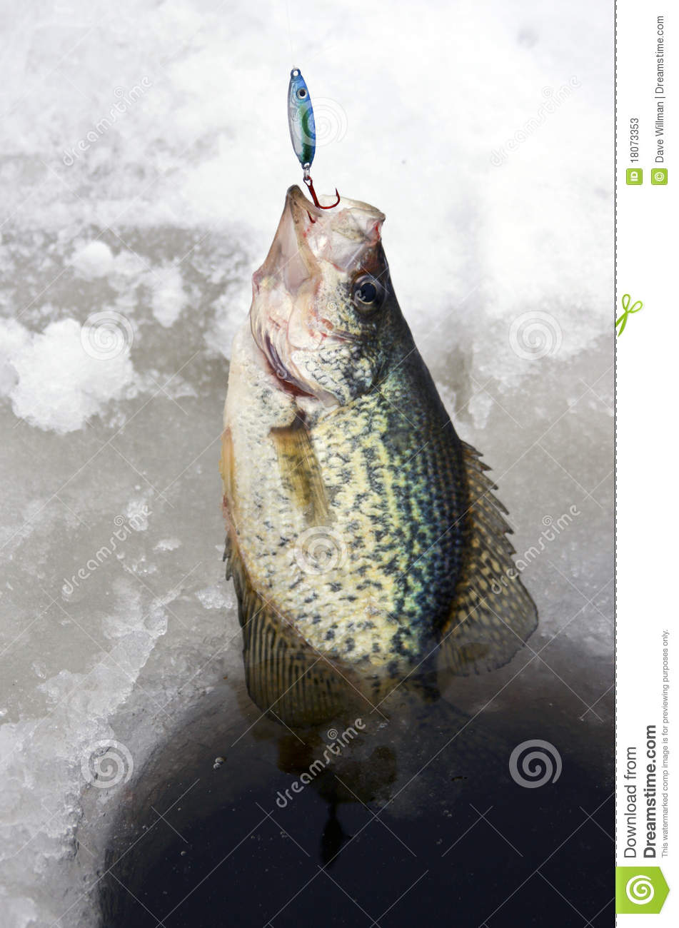 Ice fishing crappie stock image image of catch fishing for Crappie ice fishing