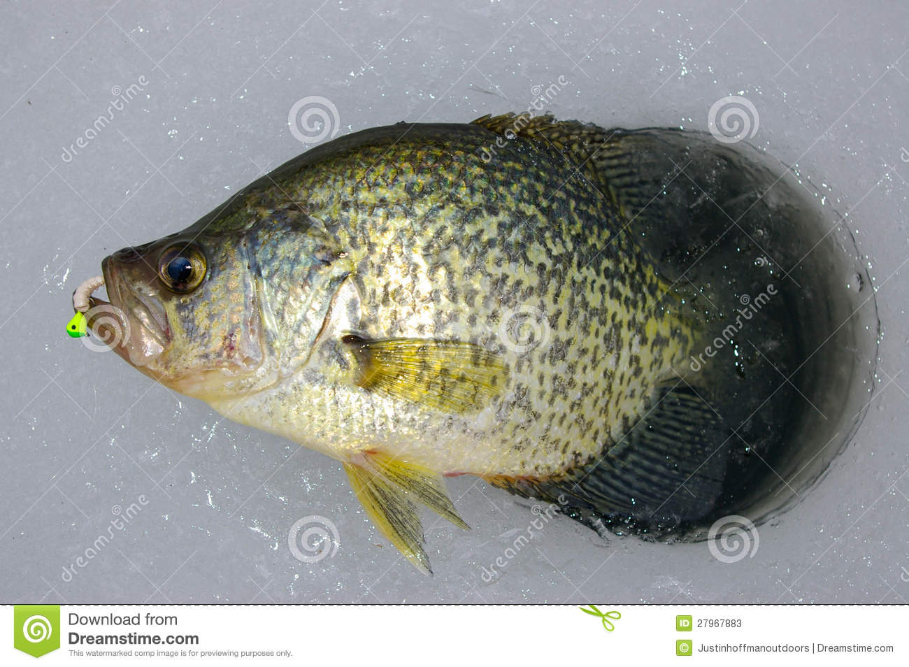Ice fishing crappie stock photos image 27967883 for Crappie ice fishing