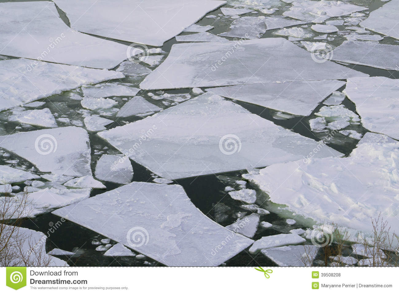Ice Pans in the Bay
