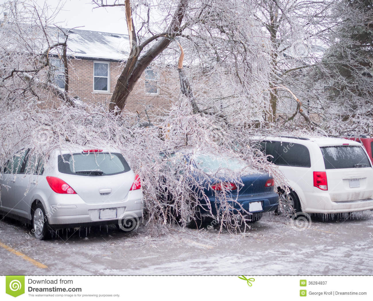 Trees which have fallen onto cars in a parking lot due to the extreme