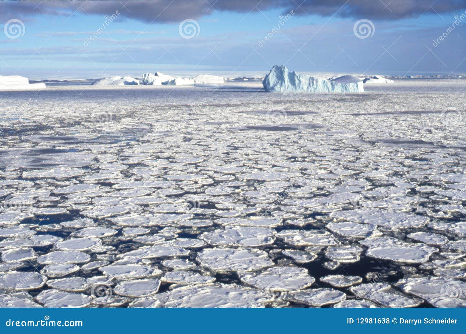 Icebergs in Sea Ice