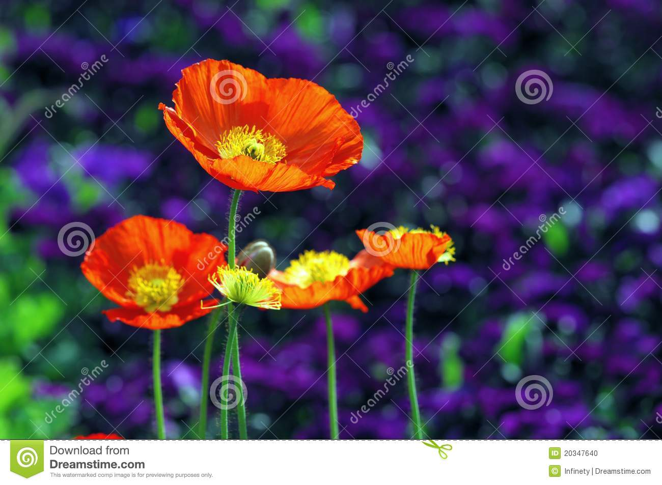Nature Color Poppy Seed