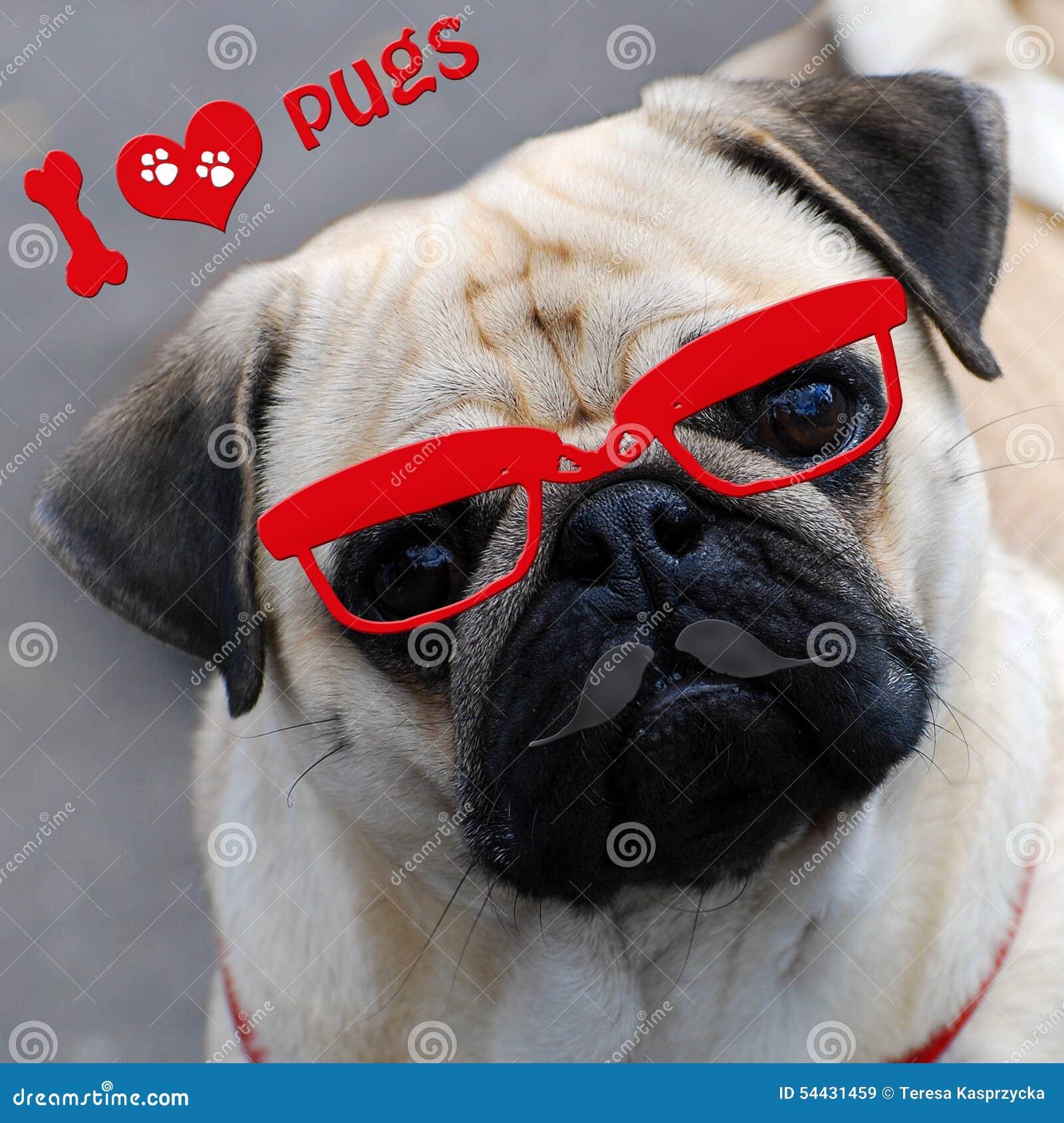 Ich liebe Pugs mit lustigem Hund