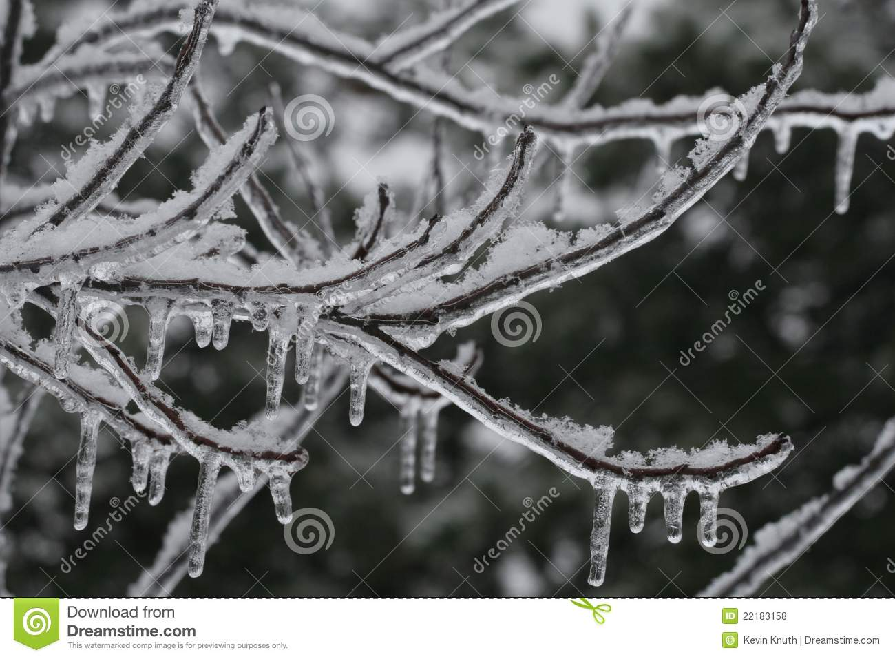 icicles decorate frozen branches royalty free stock photos