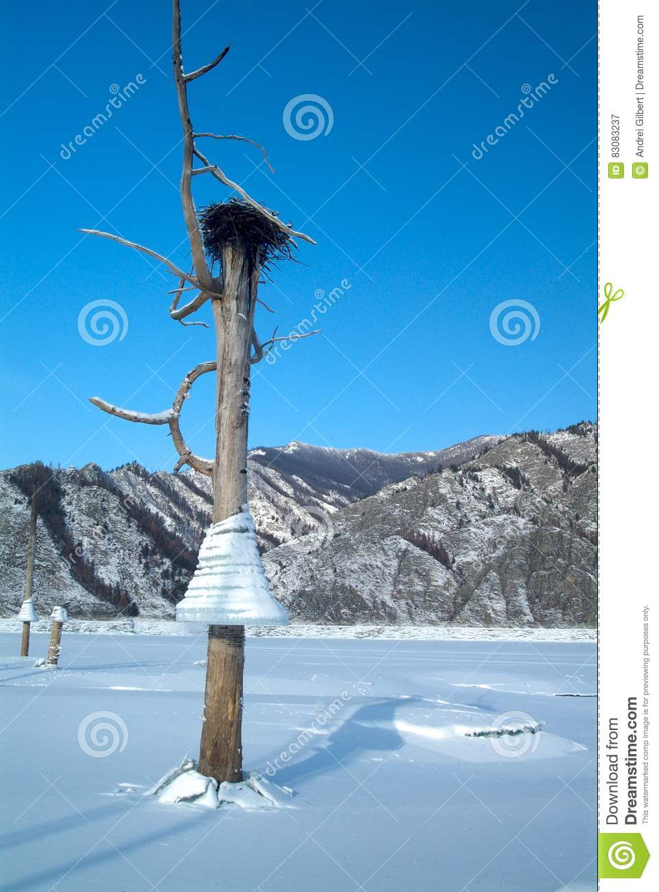 Icicles on a tree, background of mountains in the lake, bird`s nest