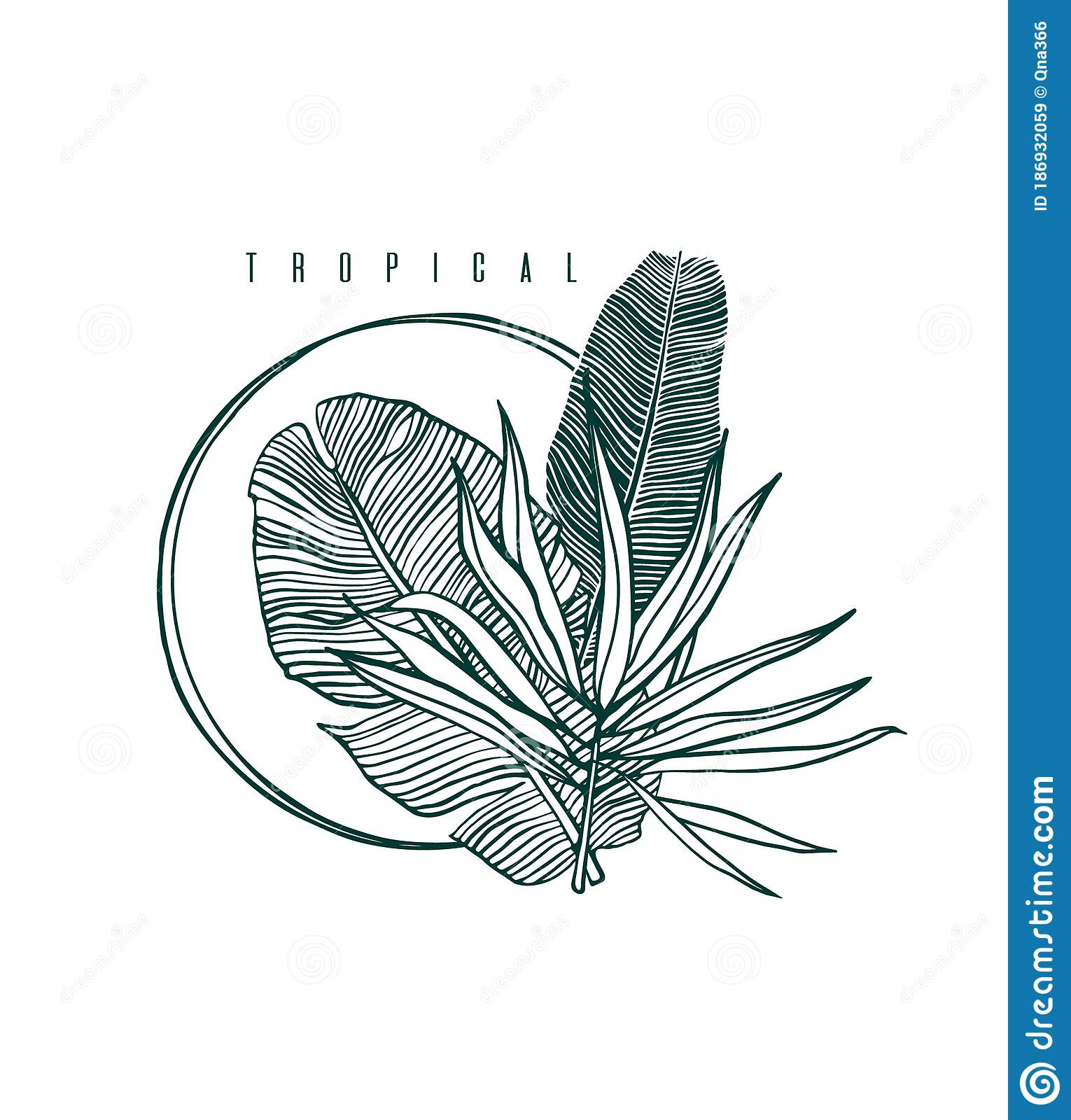 Icon With Palm And Banana Leaf Outline Drawing Of Tropical Leaves Stock Vector Illustration Of Icon Aloha 186932059 Tropical plants leaves watercolor sketch icons vector. dreamstime com