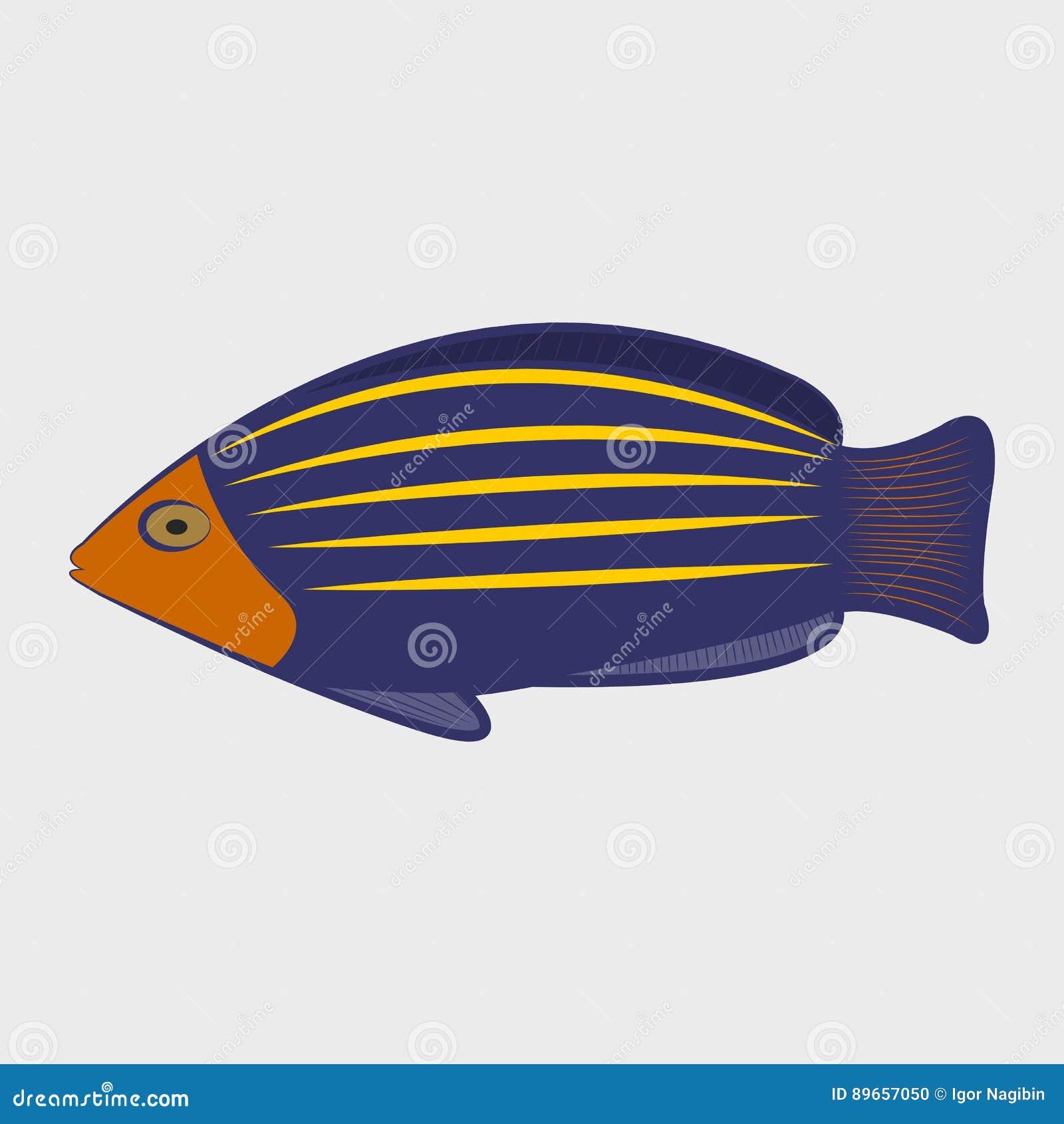 icon reef fish stock vector illustration of aquarium