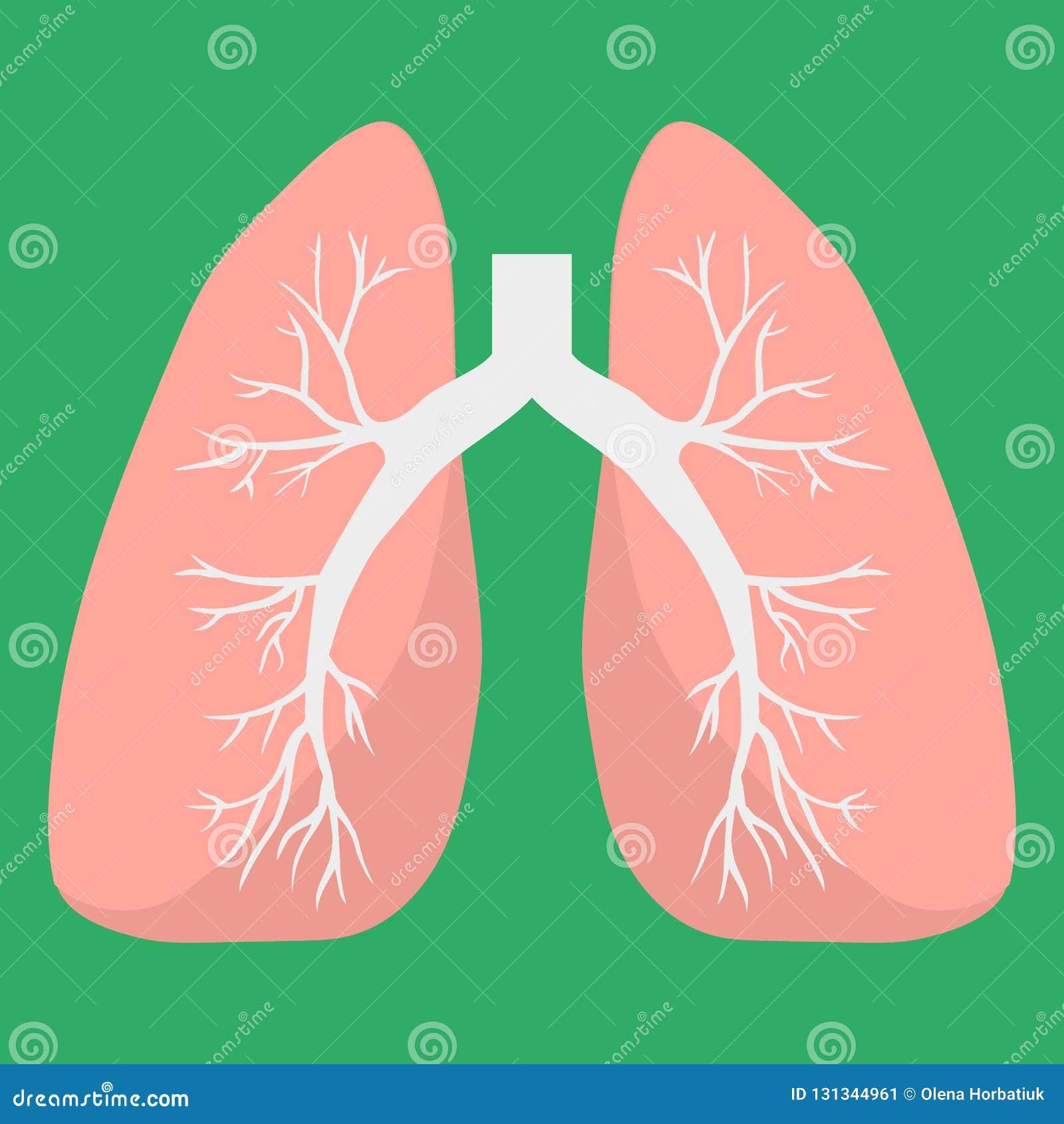 Icona dei polmoni Organo interno umano Icona medica di vettore Concetto di anatomia Sanità Stile piano