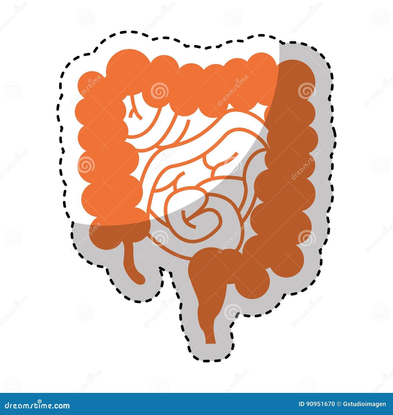Icona dell intestino dell organo umano