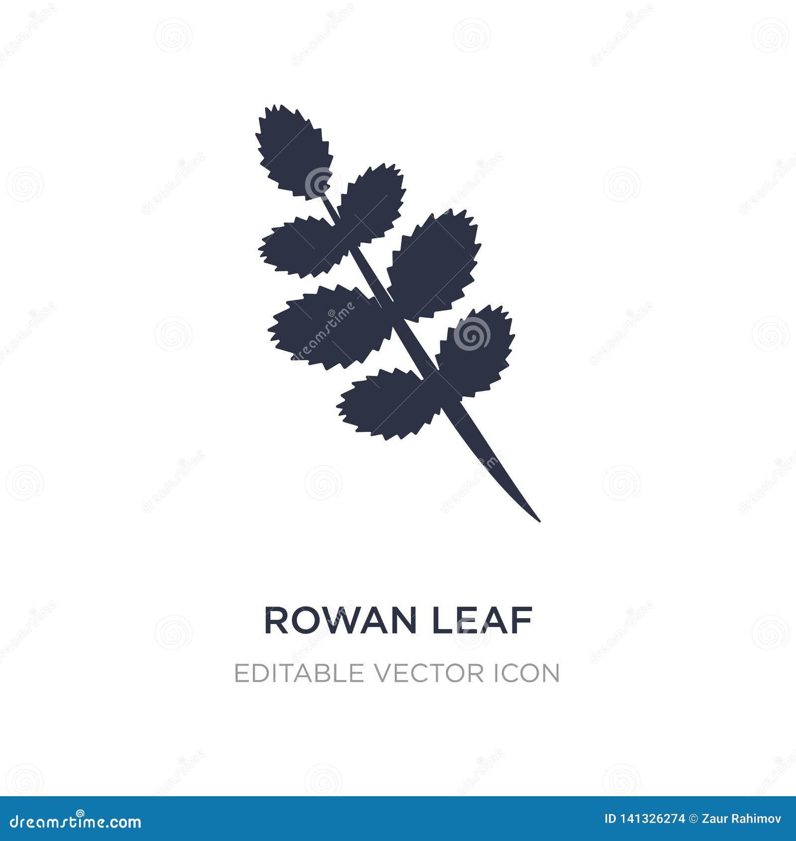 Icona della foglia della sorba su fondo bianco Illustrazione semplice dell elemento dal concetto della natura