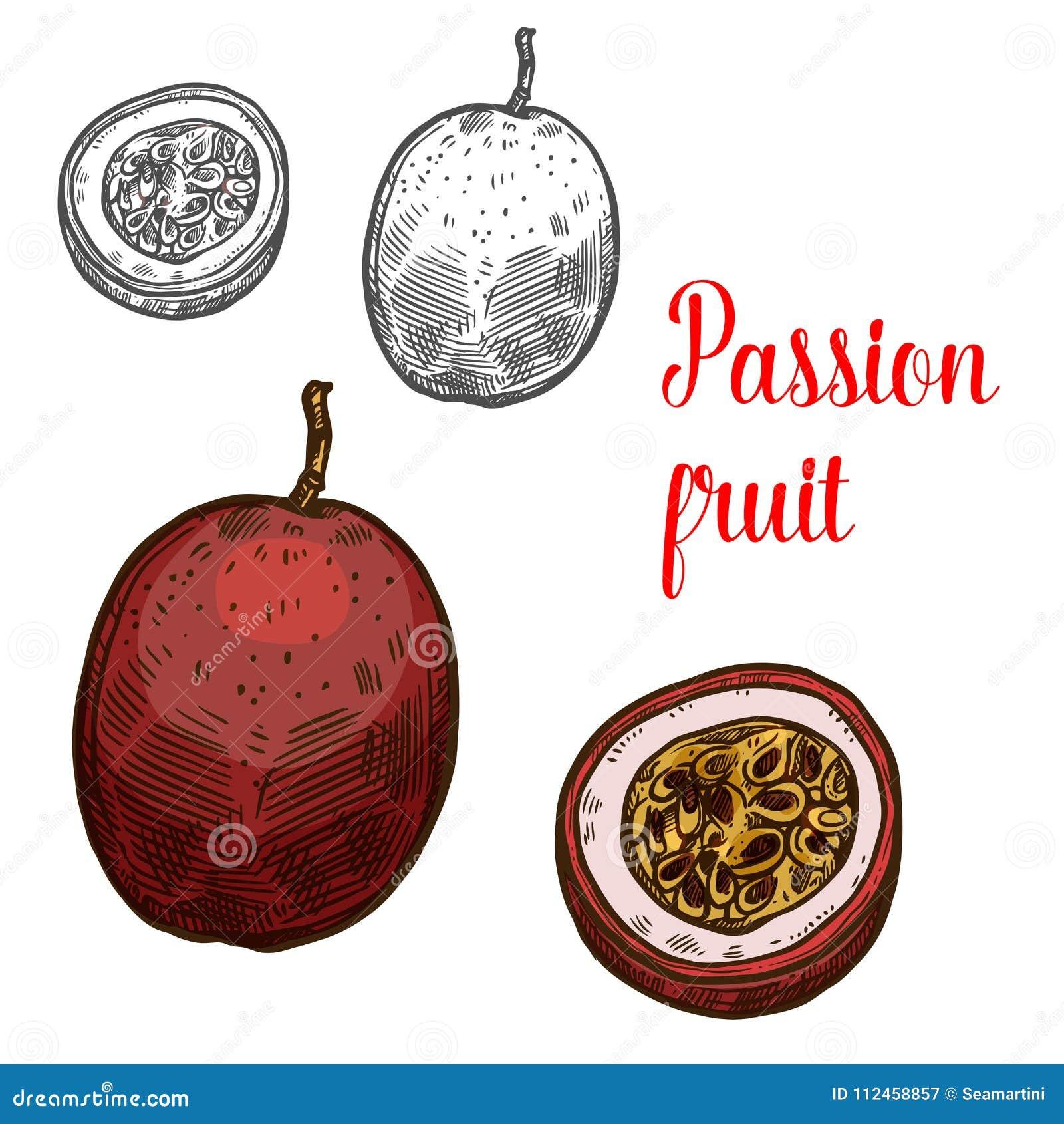 Icona esotica di frutti di schizzo di vettore del frutto della passione