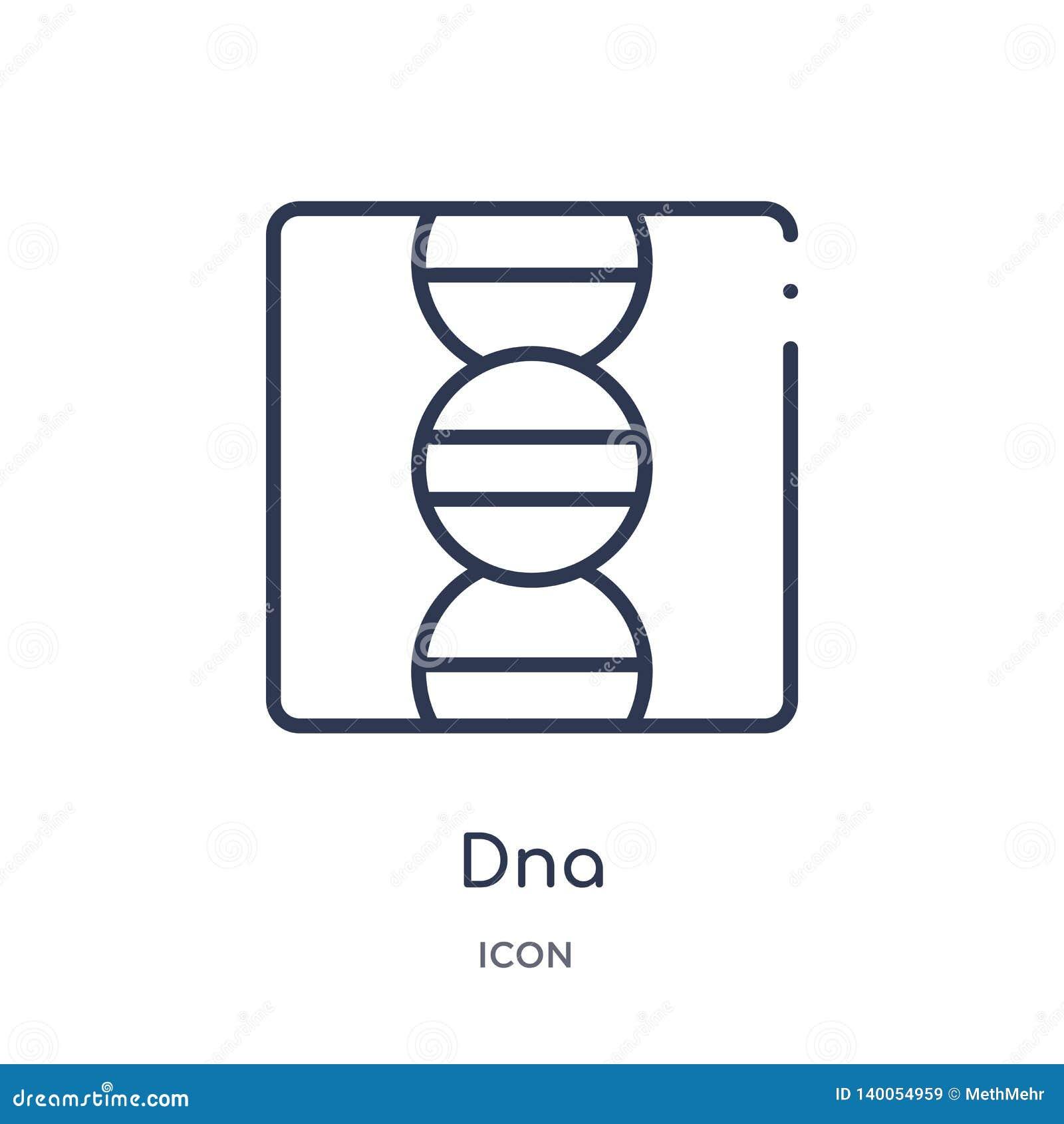 Icona lineare del DNA dalla raccolta del profilo di istruzione Linea sottile vettore del DNA isolato su fondo bianco illustrazion