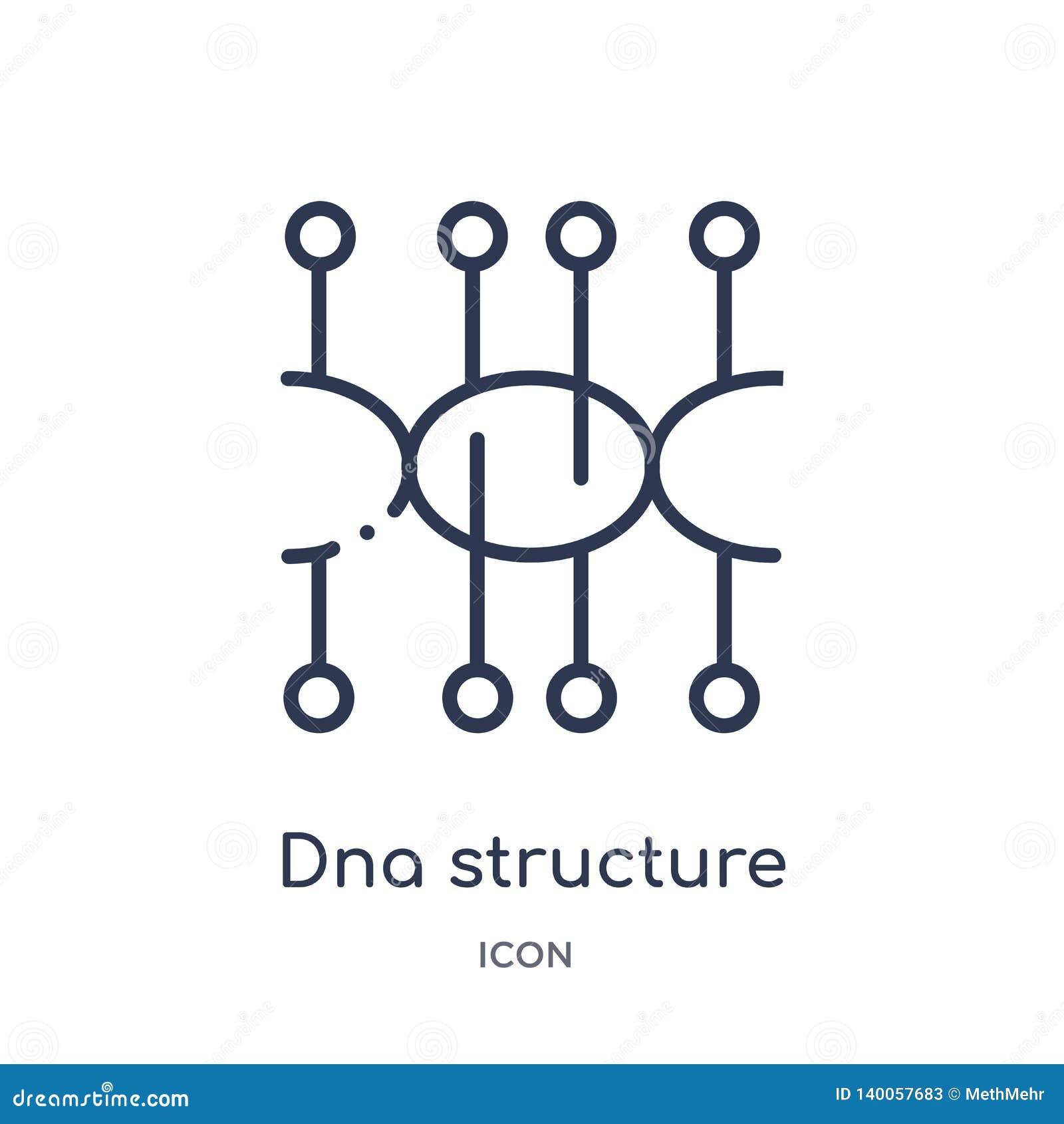 Icona lineare della struttura del DNA dalla raccolta futura del profilo di tecnologia Linea sottile icona della struttura del DNA