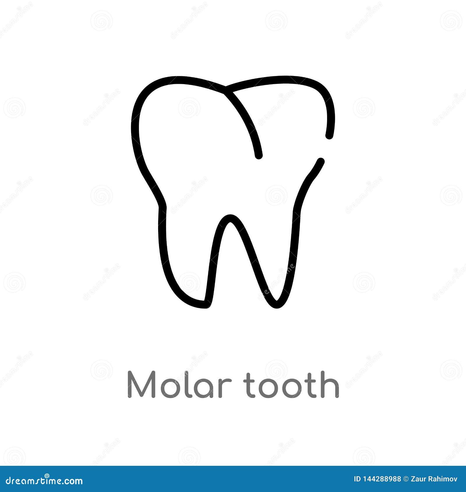 Icona molare di vettore del dente del profilo linea semplice nera isolata illustrazione dell elemento dal concetto medico Colpo e