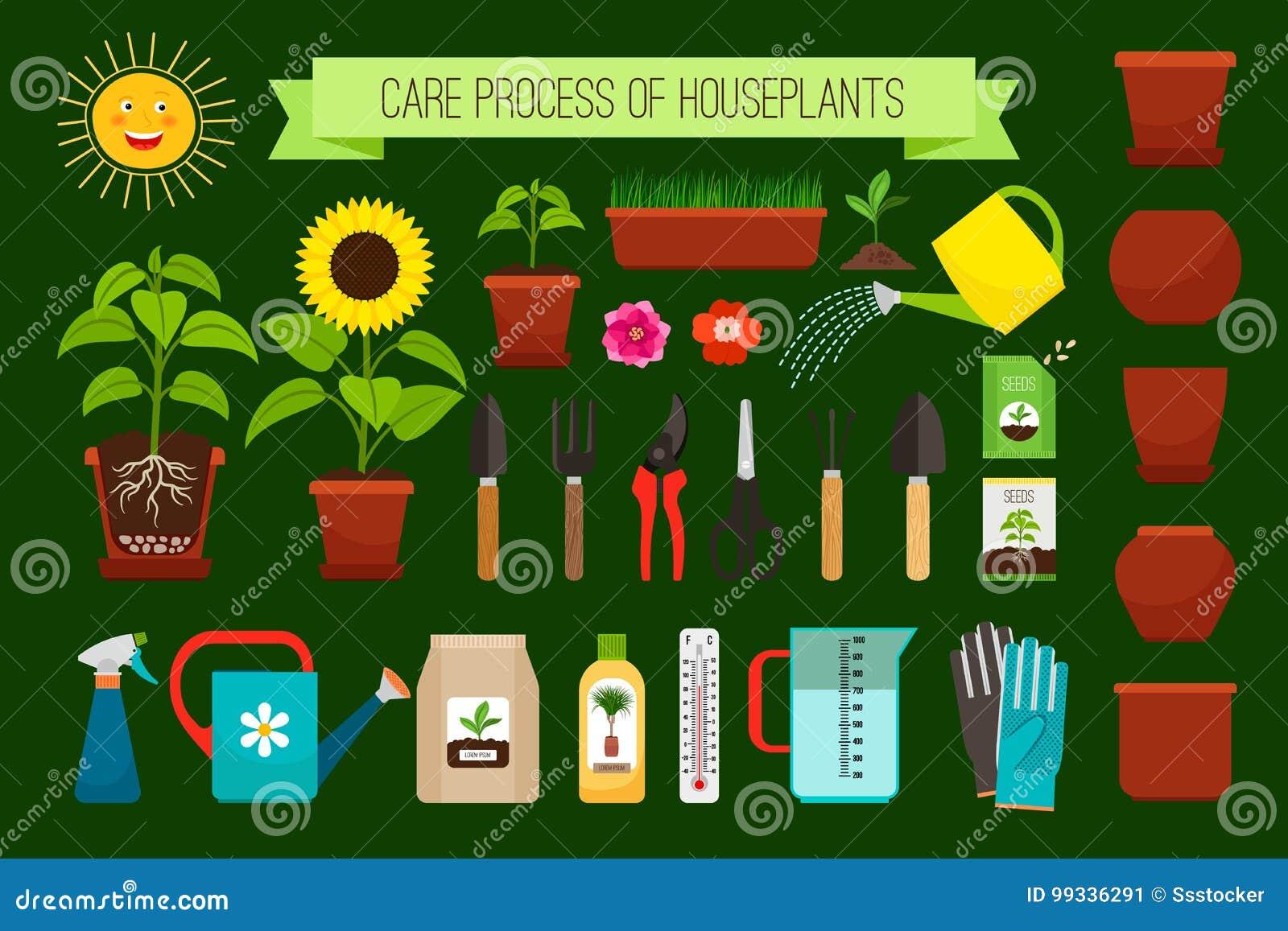 Piante Strane Da Appartamento icone di processo di cura delle piante da appartamento