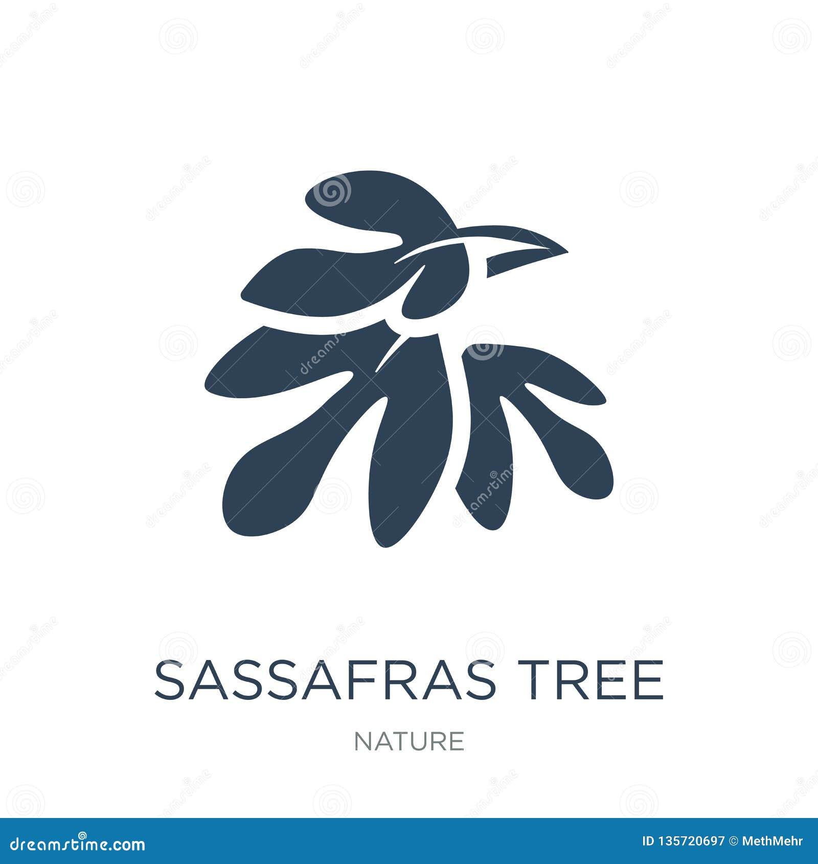 Icono del árbol de sasafrás en estilo de moda del diseño icono del árbol de sasafrás aislado en el fondo blanco icono del vector
