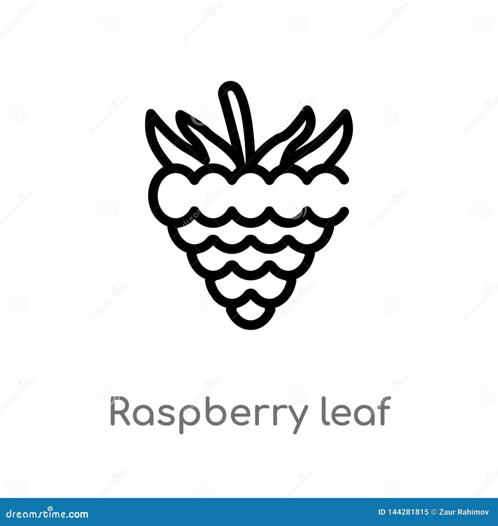 Icono del vector de la hoja de la frambuesa del esquema línea simple negra aislada ejemplo del elemento del concepto de la comida