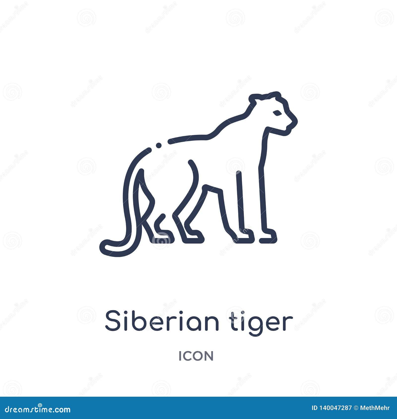 Icono linear del tigre siberiano de animales y de la colección del esquema de la fauna Línea fina vector del tigre siberiano aisl
