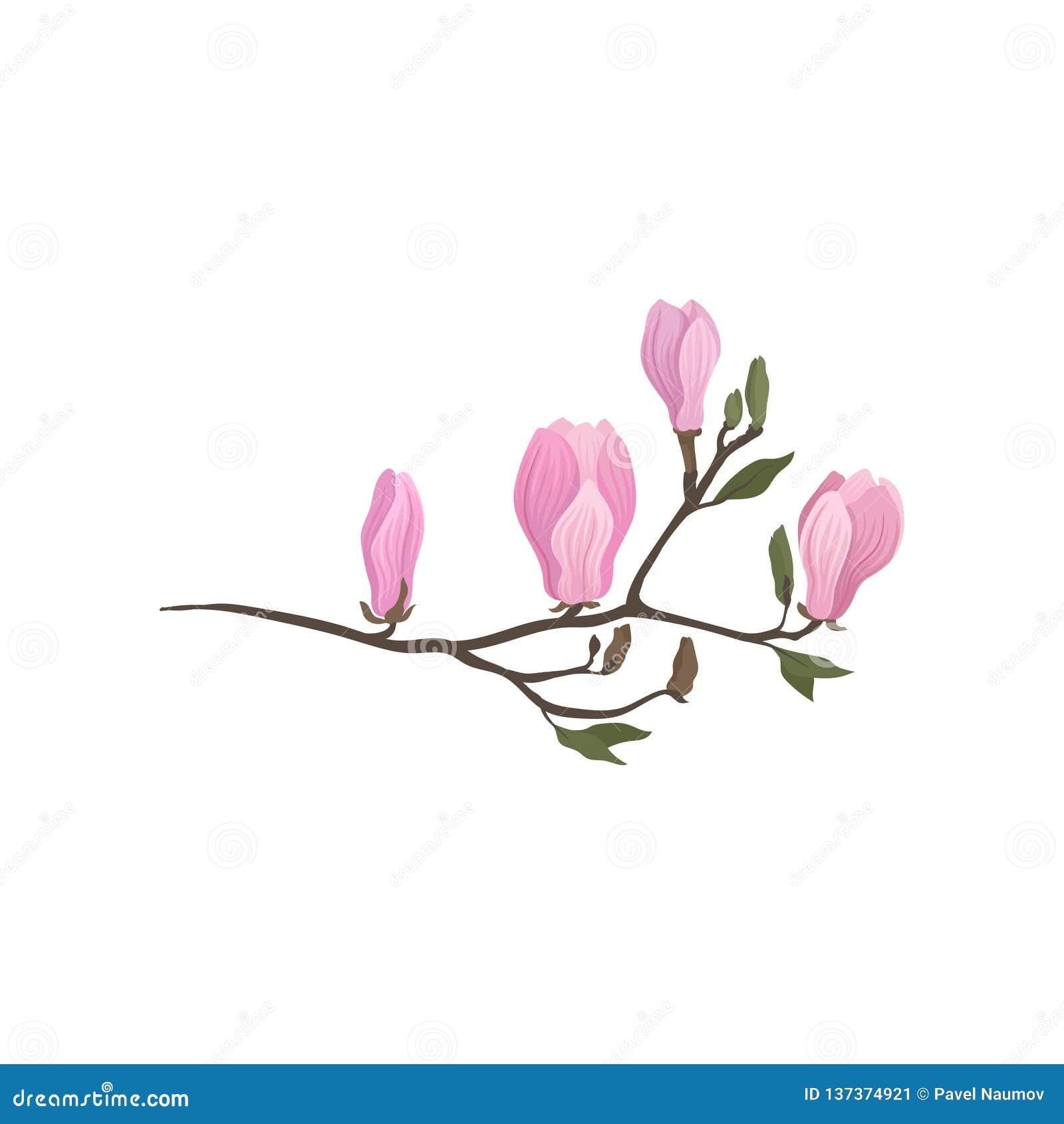 Icono plano detallado del vector de la rama de florecimiento de la magnolia Ramita con las pequeñas flores rosadas Tema de la nat