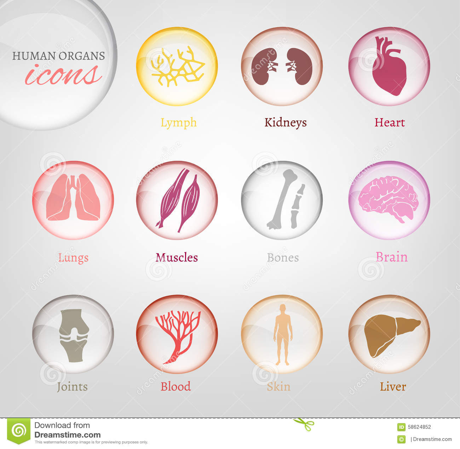 Iconos de los órganos humanos