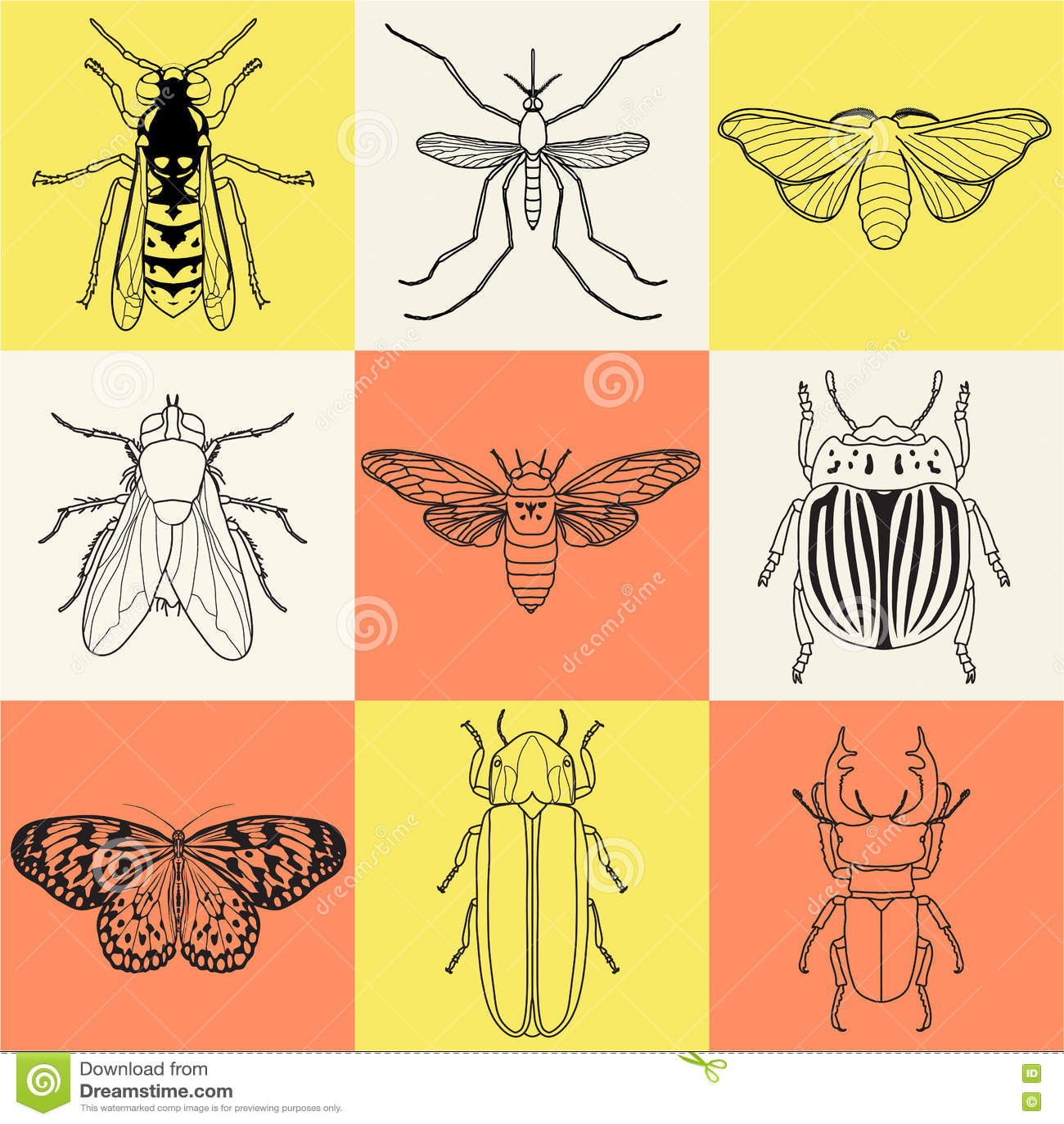 Increíble Luciérnaga Anatomía De Insectos Foto - Anatomía de Las ...