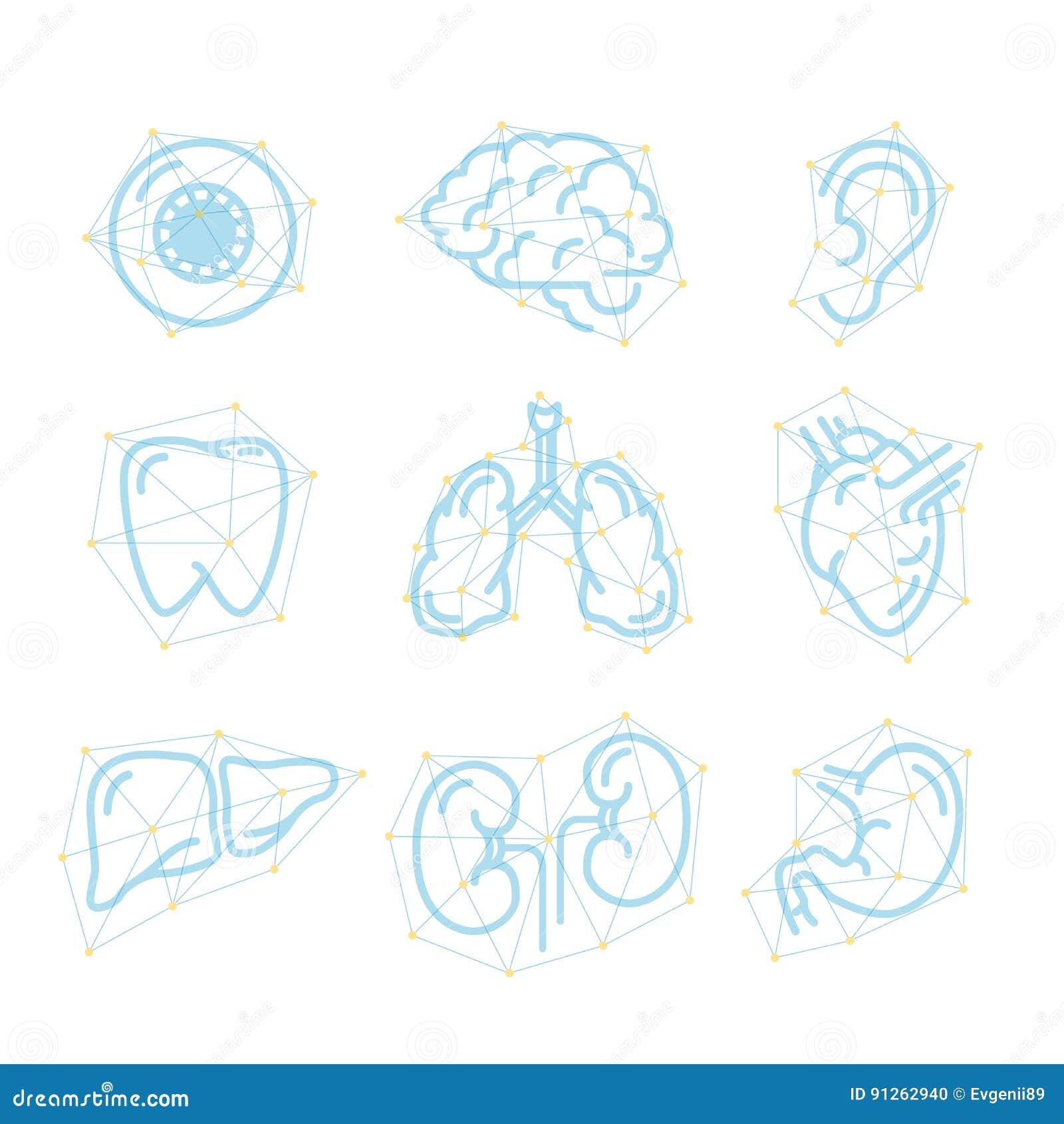 Iconos Futuristas Del Esquema De órganos Humanos En Blanco ...