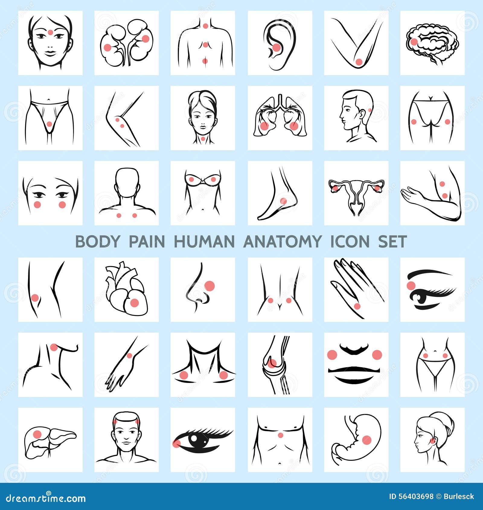 Iconos Humanos De La Anatomía Del Dolor De Cuerpo Ilustración del ...