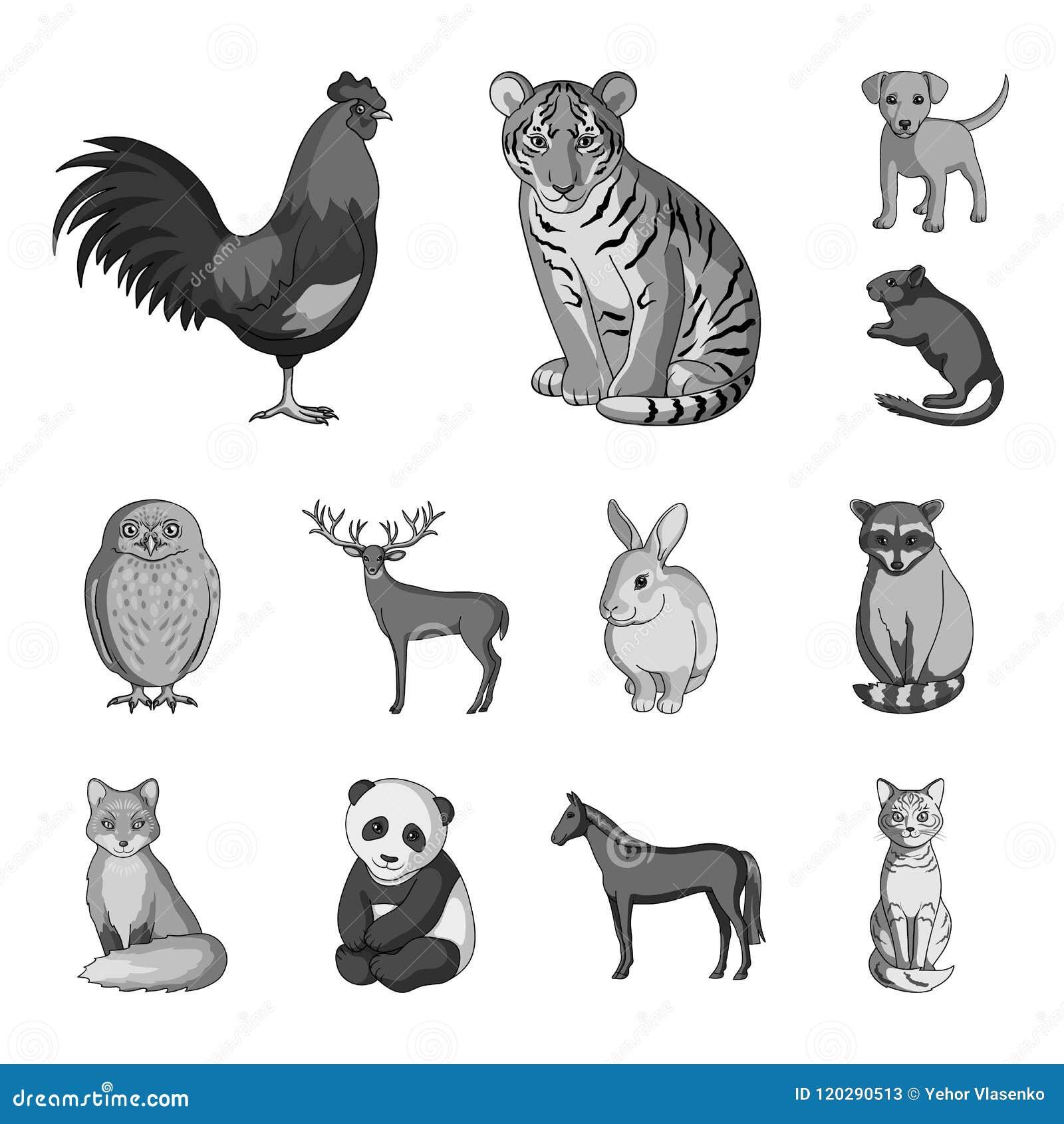 Iconos Monocromáticos De Los Animales Realistas En La Colección Del