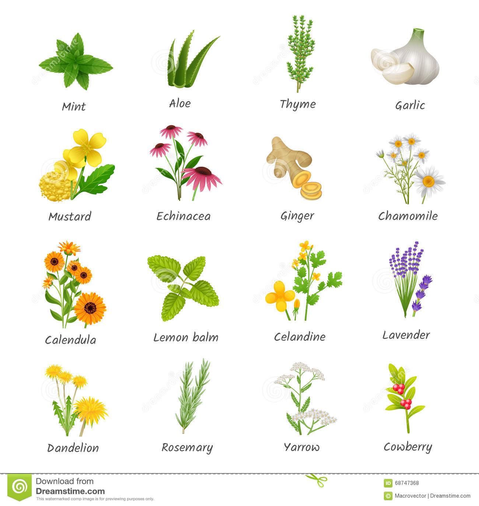 Iconos planos de las plantas medicinales de las hierbas - Cosas sobre las plantas ...