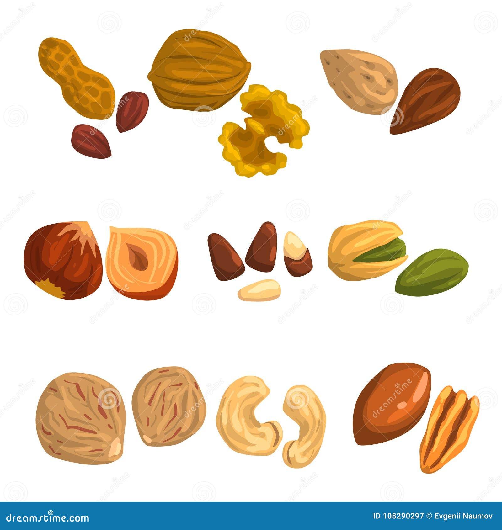 Iconos planos del vector de nueces y de semillas Avellana, pistacho, anacardo, nuez moscada moscada, nuez, nuez de Brasil, pacana