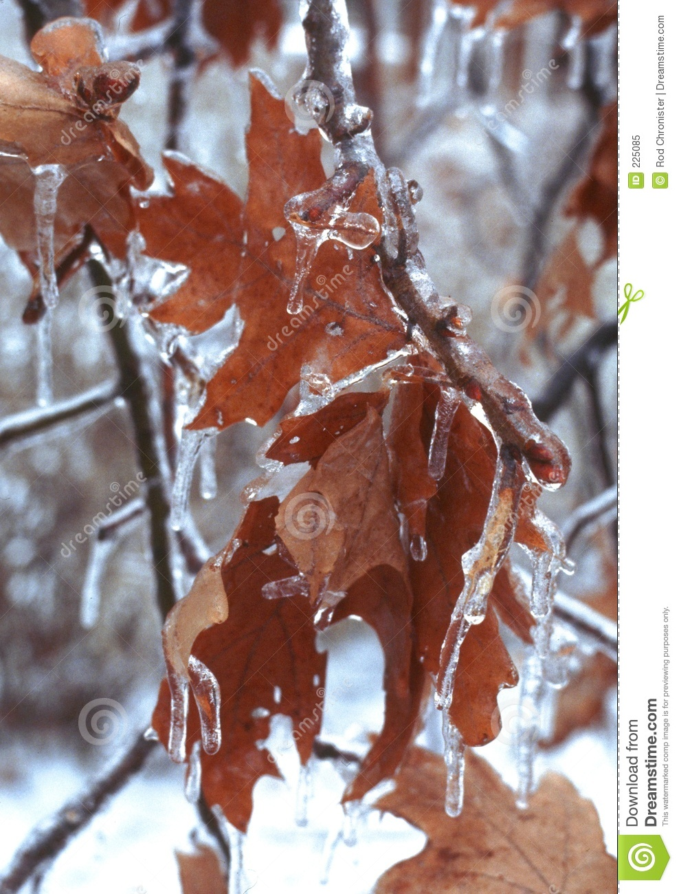 Download Icy Leaves stock image. Image of seasons, forlorn, transitions - 225085