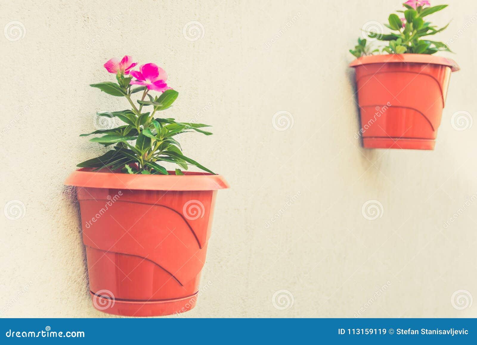 Idées à La Maison De Décoration Jardin Sur Un Mur Image