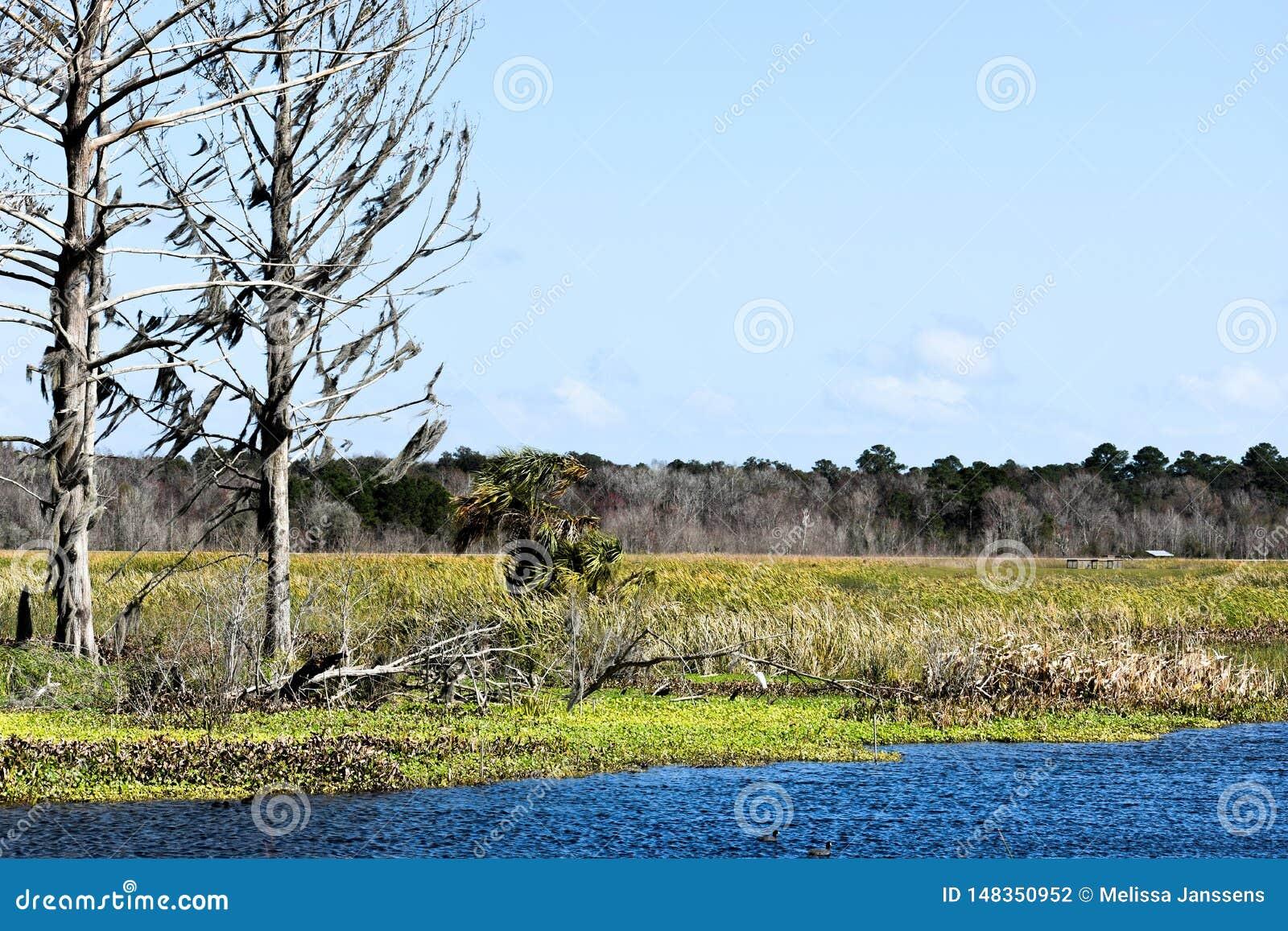 Id?lico e Serene Story Book Setting das ?rvores velhas que negligenciam uma conserva do lago e de natureza em Florida