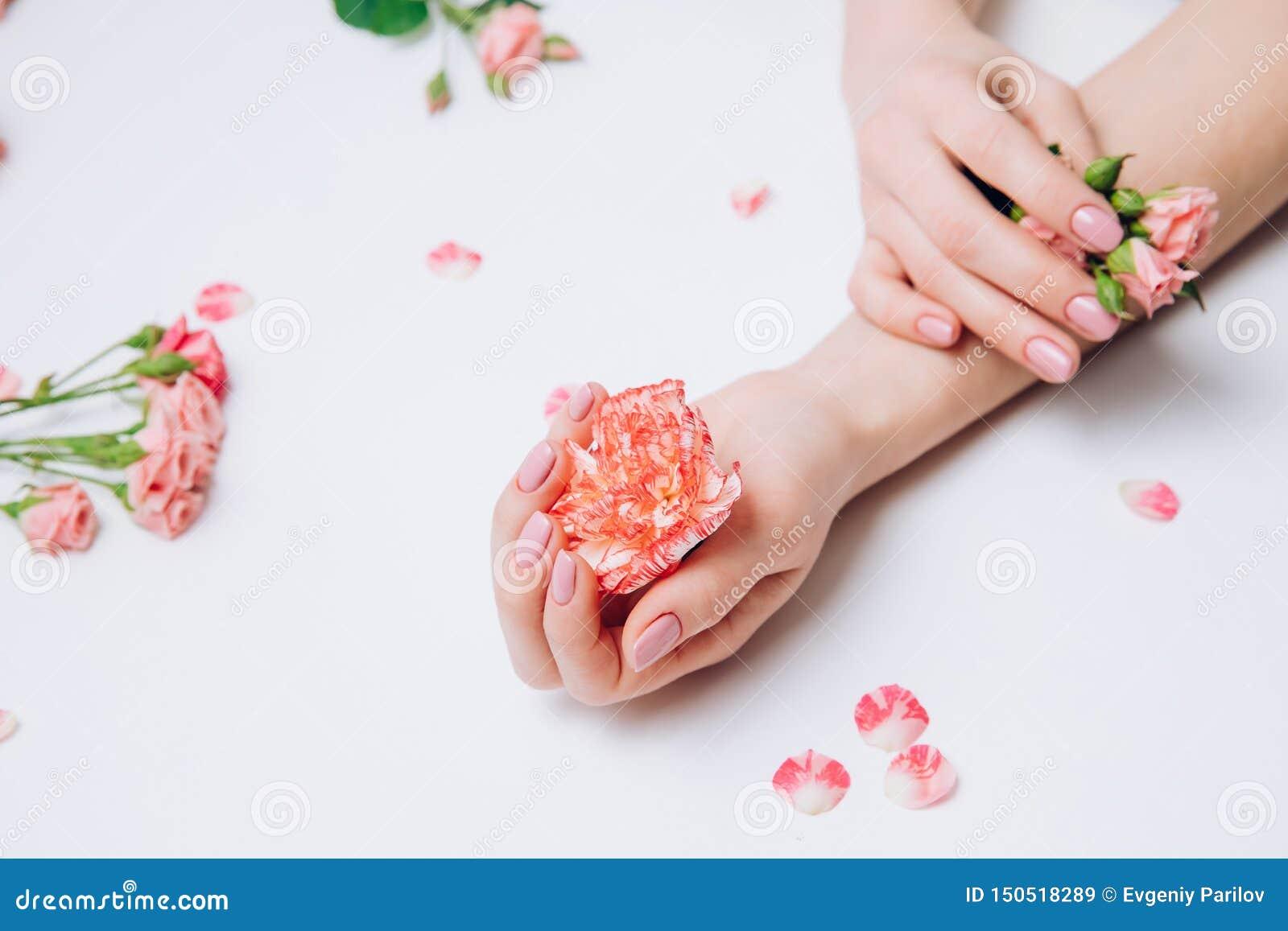 Id?rikt foto av kvinnliga h?nder f?r mode med ren hud och rosa manikyrh?llblommor i hand p? vit bakgrund
