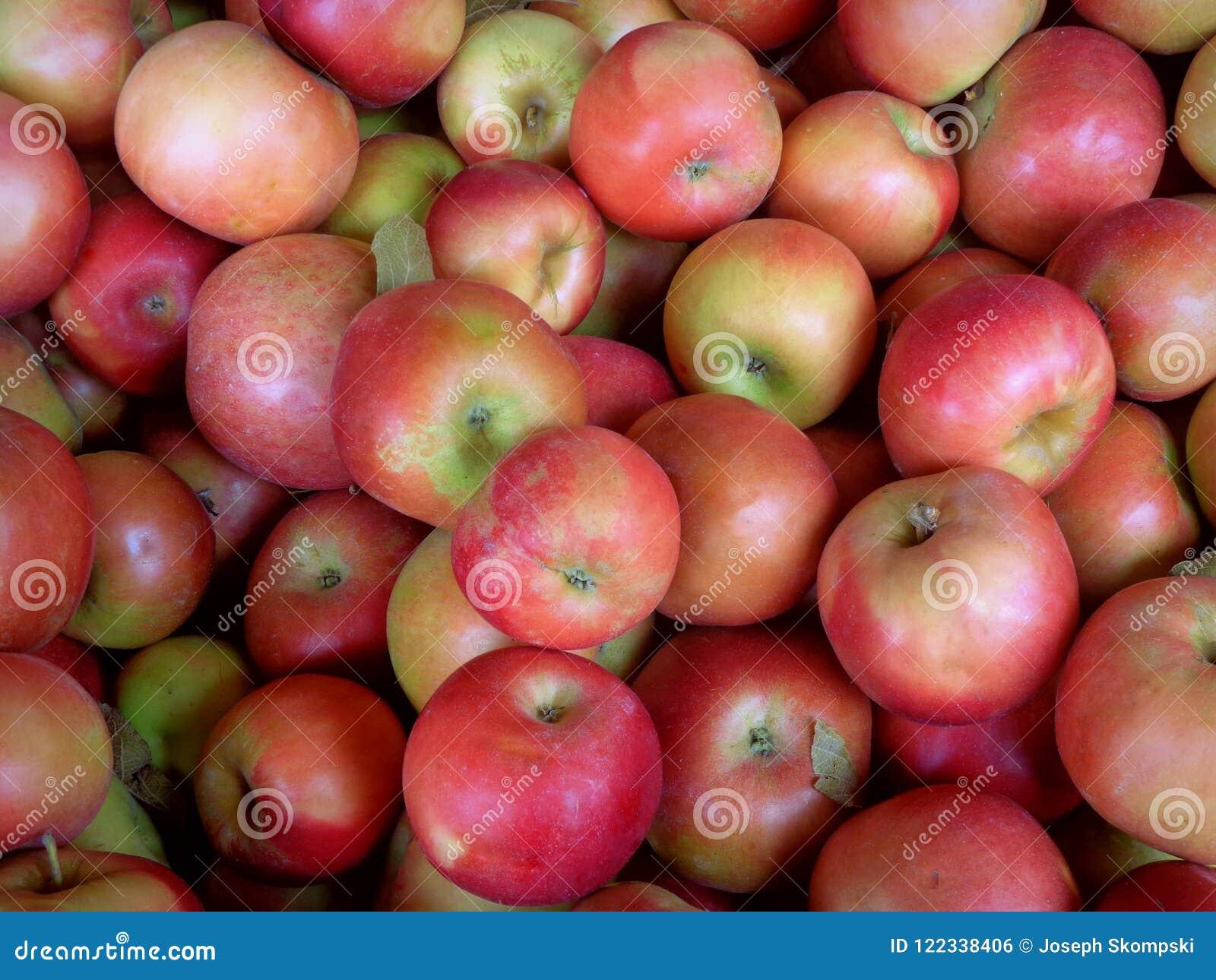 Ida rewolucjonistki jabłka