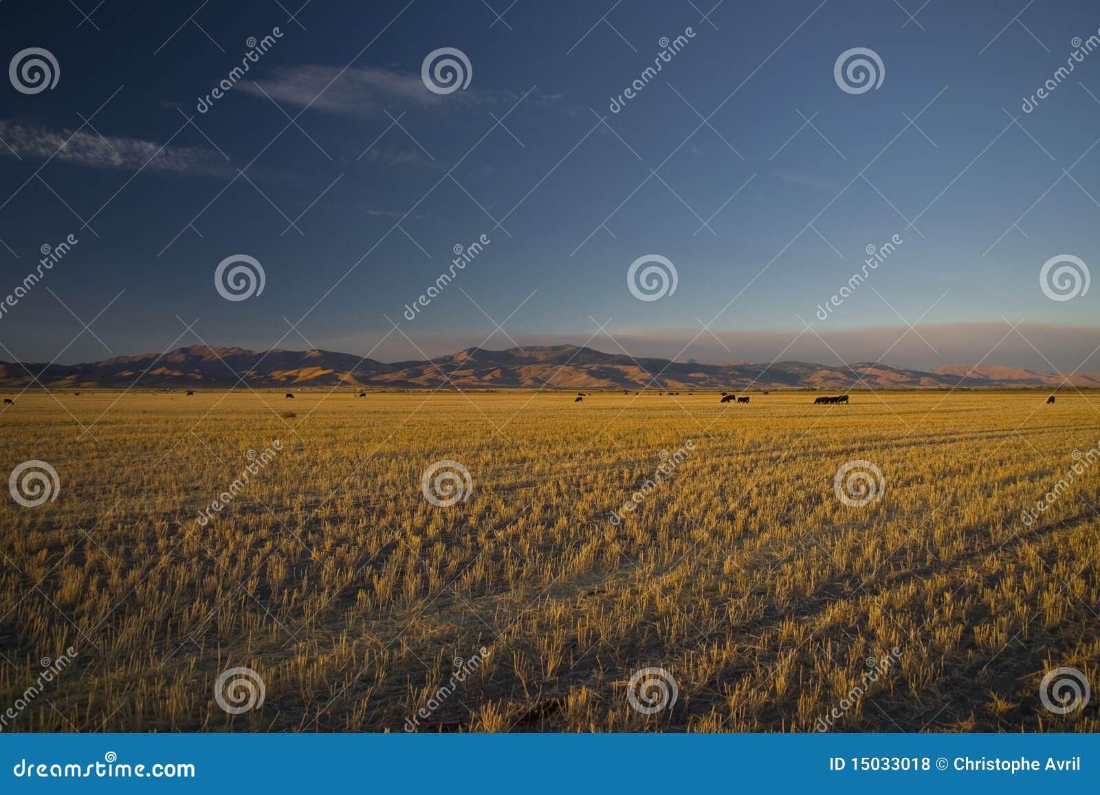 fields idaho ...