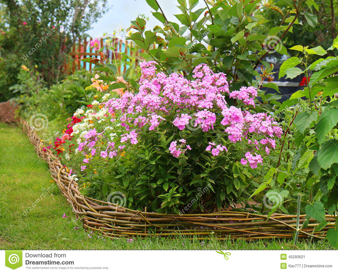 Ideas For Garden Phlox Paniculata In Bloom Stock Photo Image